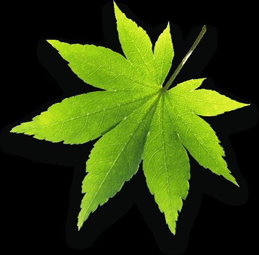 fogyás alsócomb levelek segítségével
